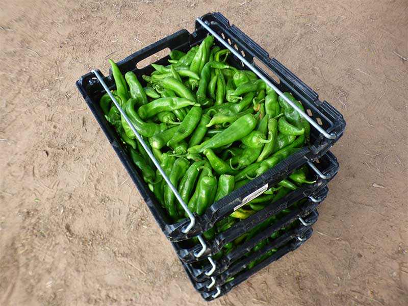 Crate of chile