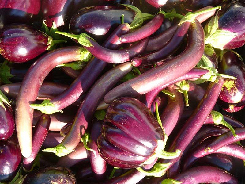 Mixed varieties of eggplant